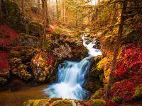 Дикий водопадик в лесу