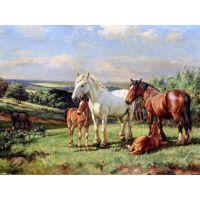 Лошади с жеребятками