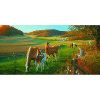 Семья лошадей в поле