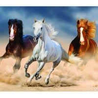 Кони в пыли