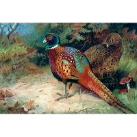 Пара фазанов
