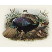 Семья фазанов