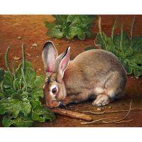 Кролик и подорожник