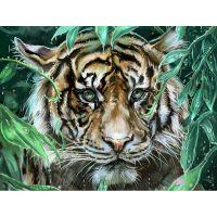 Тигр полосатый 2