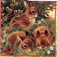 Три зайца и верба
