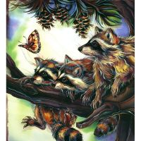 Три енота и бабочка
