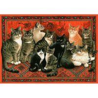 Кошачье собрание на ковре