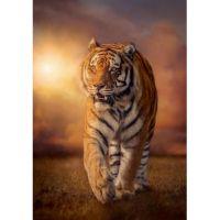 Тигр на закате 2