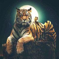 Тигр и бельчонок