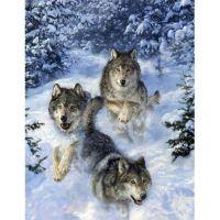 Волки на охоте в лесу