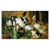 Кролики в конюшне