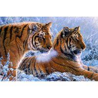 Тигры зимой