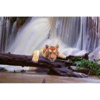 Тигр у водопада