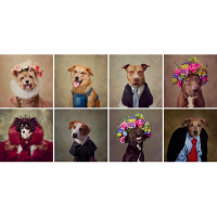 Фотосессия собачек