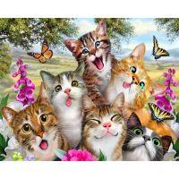 Веселые котятки