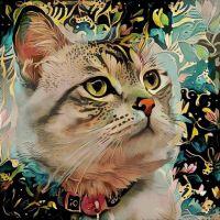 Арт котик