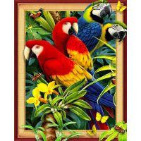 Четыре попугая на ветке